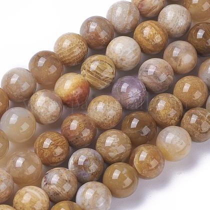 Cuentas de piedra de crisantemo natural hebrasG-F648-01-C-1