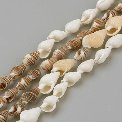 Cuentas de concha de mar natural hebrasSSHEL-R043-05-1